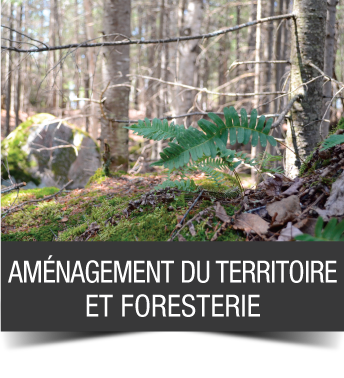 accueil_4_amenagement_foresterie